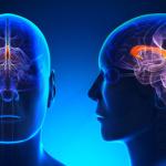 Ictus cerebrale, l'infusione di vescicole extracellulari favorisce il recupero neurologico. Studio italiano